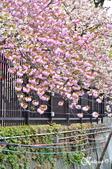 2013-04京阪奈花見DAY1:DSC_8267-2_調整大小D7.jpg