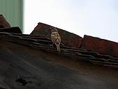 2007-10北埔柿餅外拍:DSC_0067