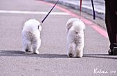2010-12帶小狗試機: