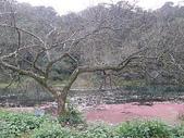 2010-12-19 福山植物園:PC190115