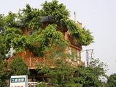2007.07 后里:樹屋