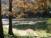 2010-12-19 福山植物園:PC190064