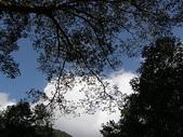 2010-12-19 福山植物園:PC190080
