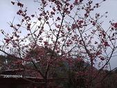 2007.02 羅浮-桃源仙谷:桃源仙谷