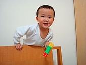 肥ㄗㄗ(2歲):愛爬床頭板....
