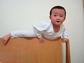 肥ㄗㄗ(2歲):用力.....爬~~~