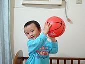 肥ㄗㄗ(2歲):丟球球...
