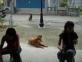 雨天烤肉趣:香味引來了一堆狗狗駐守~