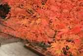 2009京都紅葉狩11/28-11/29:清水寺