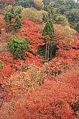 2009京都紅葉狩11/28-11/29:萬紅叢中幾點綠