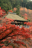 2009京都紅葉狩11/28-11/29:奧院