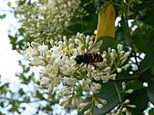 2007.4.1關西:蜜蜂