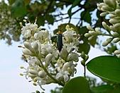2007.4.1關西:吉丁蟲