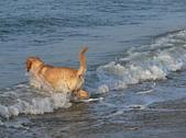 喜歡游泳的狗:歡樂的狗