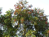 2007.4.12瓦拉米步道:P1000867