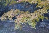 2011年11月內藏山的美:20101103_5746.JPG