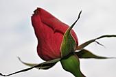 我家花兒又開了。:20110216_6575.JPG