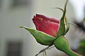 我家花兒又開了。:20110216_6574.JPG