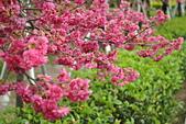 芬園花卉生產休憩園區:DSC_0721.JPG