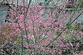 我家花兒又開了。:20110216_6592.JPG