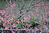 我家花兒又開了。:20110216_6591.JPG
