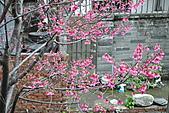 我家花兒又開了。:20110216_6572.JPG