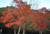 2011年11月內藏山的美:20101103_5726.JPG