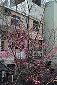 我家花兒又開了。:20110210_6560.JPG