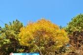 2011年11月內藏山的美:20101103_5546.JPG