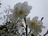 芬園花卉生產休憩園區:2012-02-27_261.JPG
