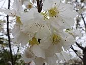 芬園花卉生產休憩園區:2012-02-27_262.JPG