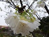 芬園花卉生產休憩園區:2012-02-27_264.JPG