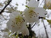 芬園花卉生產休憩園區:2012-02-27_265.JPG