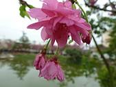 芬園花卉生產休憩園區:2012-02-27_269.JPG