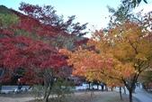 2011年11月內藏山的美:20101103_5683.JPG