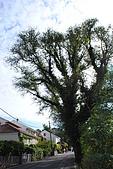 亞得裏亞海-科楚拉島(馬可波羅之家)和史東(世界第二長的城牆)(10/21):20091021_389.JPG
