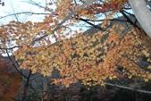 2011年11月內藏山的美:20101103_5716.JPG
