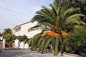亞得裏亞海-科楚拉島(馬可波羅之家)和史東(世界第二長的城牆)(10/21):20091021_414.JPG