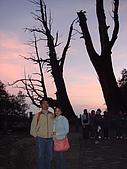 南投縣信義鄉:信義塔塔加夫妻樹.JPG
