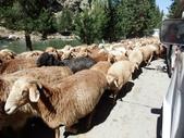 北疆:北疆十日 2113.JPG