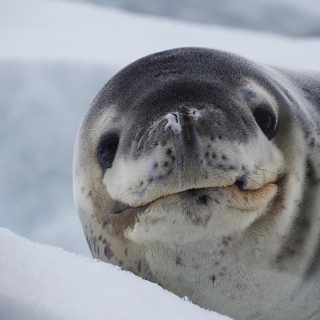 IMG_7419.JPG - 南極