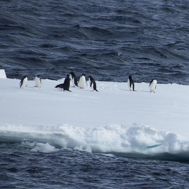 IMG_6842.JPG - 南極