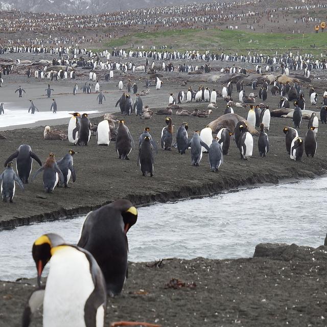 026.JPG - 南極
