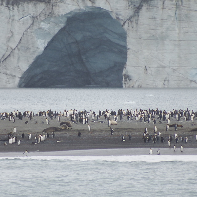 IMG_6207.JPG - 南極