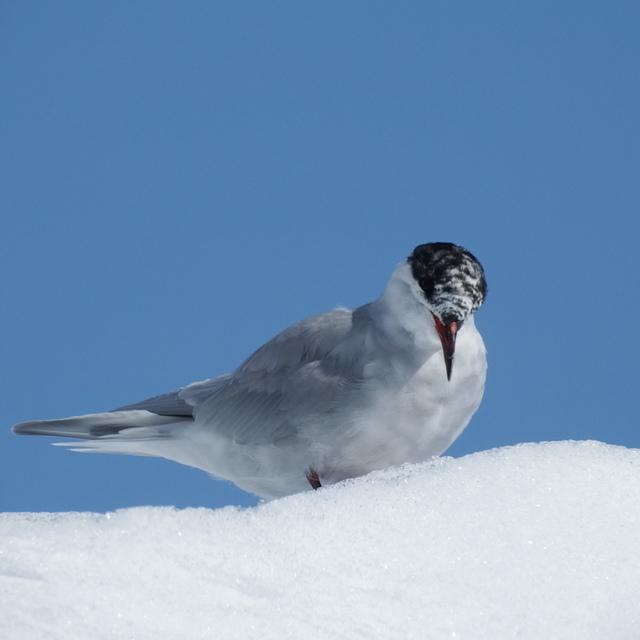 349.JPG - 南極
