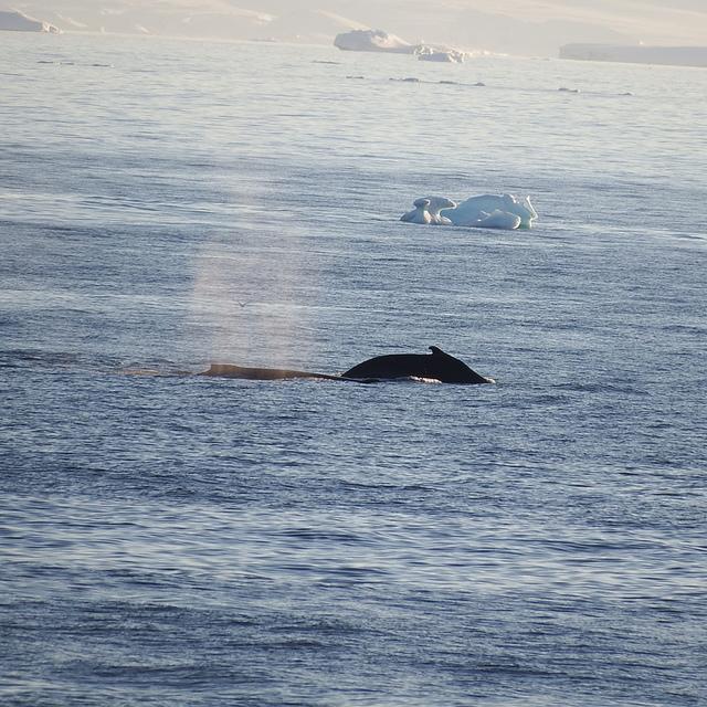 IMG_8246.JPG - 南極