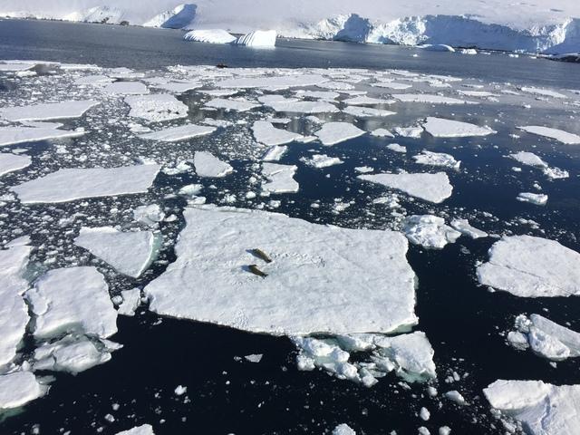 IMG_7509.JPG - 南極