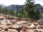 北疆:北疆十日 2218.JPG