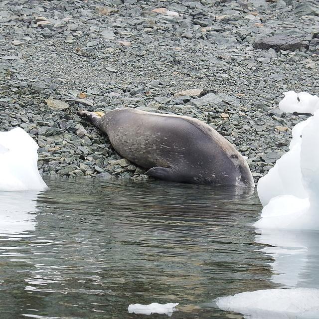 274 (2).JPG - 南極