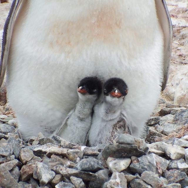 245.JPG - 南極
